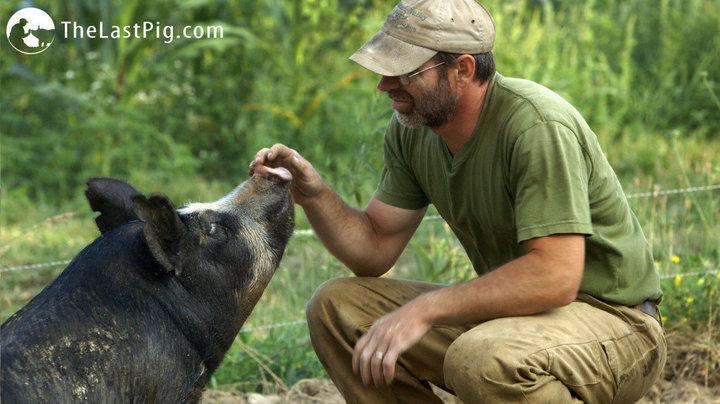 Bob and pig