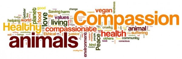 A word cloud showing what VegFund's grantees like best about being vegan