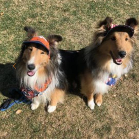 Dogs at Boulder Valley Humane Society Doggie Dash