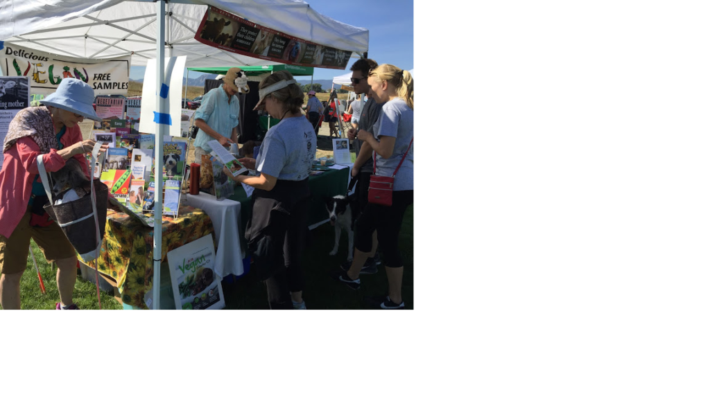 Doggie Dash Vegan Food Sampling